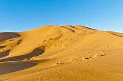 Dunes of Erg Chebbi at Morocco Stock Images