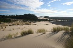 Dunes et herbe 3 Images stock