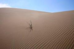 Dunes et herbe 4 Images libres de droits