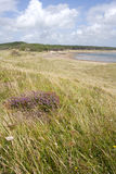 Dunes et herbe de sable Photographie stock libre de droits