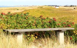 Dunes of Falsterbo near Nabben, Sweden Royalty Free Stock Images