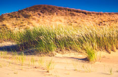 Dunes. Field of sand and grass, dunes in Lithuania royalty free stock photos