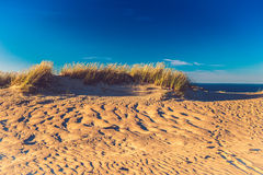 Dunes. Field of sand and grass, dunes in Lithuania royalty free stock photo