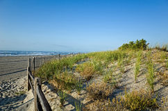 Dunes. Fragile sand dunes along the New Jersey shoreline in late summer.  The bright early morning sun highlights the fragile grasses that protect the town Royalty Free Stock Images