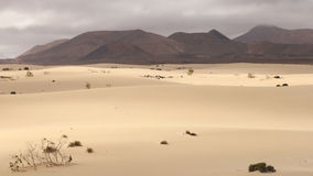 Dunes of Fuerteventura Stock Images