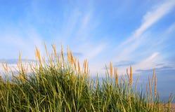 Dunes grass. A view of dunes grass in evening sunlight Stock Image