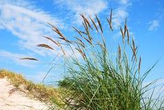 Dunes plant Stock Image