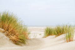 Dunes, grass, beach and sea Stock Images