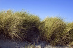 Dunes with grass and blue sky Royalty Free Stock Images