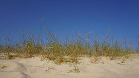 Dunes grass and blue sky Stock Image