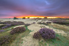 Dunes Grass and Heathland Stock Photos