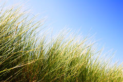 Dunes Grass with Sky Royalty Free Stock Images