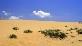 Dunes, Grass and Sky. Stock Images