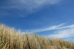 Dunes in holland. Dunes at the northsea beach in holland 2 royalty free stock photography