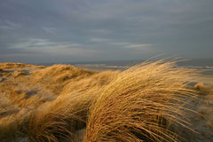 Dunes in Holland Stock Image