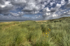 Dunes in Holland Royalty Free Stock Images
