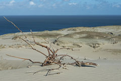 Dunes and its plants. Sand Dunes on the coast Stock Images