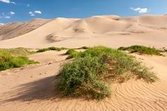 Dunes Khongoryn Els in Gobi Desert, Mongolia. Sand dunes Khongoryn Els in Gobi Desert, Umnugovi, South Gobi, Mongolia Royalty Free Stock Photo
