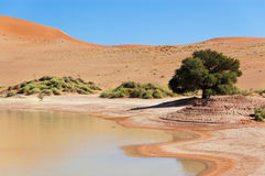 Dunes and lake in Namib desert Stock Images