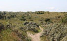 Dunes landscape, Noordhollands Duinreservaat royalty free stock images