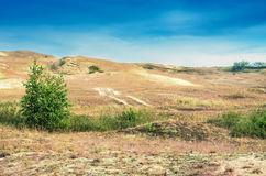 Dunes in Lithuania Stock Photos