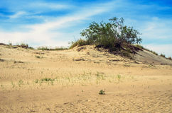 Dunes in Lithuania. Landscape of dunes and beautiful sky at Neringa, Naglis reserve near Pervalka in Lithuania royalty free stock photography