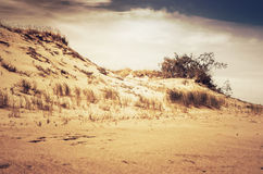 Dunes in Lithuania Royalty Free Stock Photo