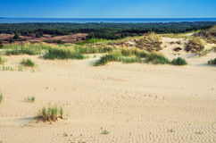 Dunes in Lithuania Stock Photography