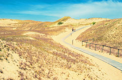 Dunes in Lithuania. Landscape of path made of wooden boards between golden color dunes and people walking on it at Neringa, Naglis reserve near Pervalka in Royalty Free Stock Photo