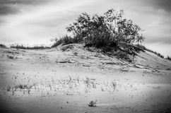 Dunes in Lithuania Royalty Free Stock Photos