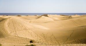 Dunes of Maspalomas Stock Images