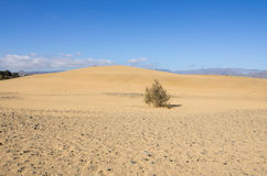 Dunes of Maspalomas Stock Images