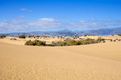 Dunes of Maspalomas Stock Image