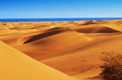 Dunes of Maspalomas, in Gran Canaria, Spain Royalty Free Stock Images