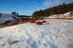 Dunes and meadow in snow Stock Photo