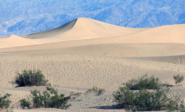 The dunes of Mesquite Royalty Free Stock Photography