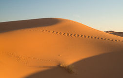 Dunes in Moroccan desert Stock Photo