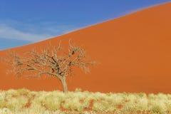 Dunes of Namib desert, Namibia, Africa Royalty Free Stock Photos