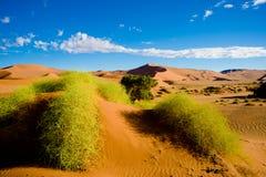 Dunes in Namibia. Orange dunes in Namib Desert, Namibia royalty free stock photo