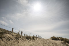 Dunes in the Netherlands Stock Photo