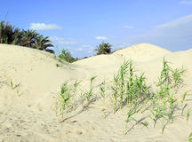 Dunes in Nizzanim, Israel Royalty Free Stock Photography