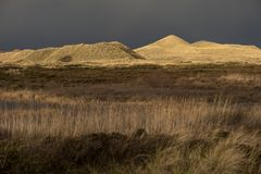 Dunes on the North Frisian Island Amrum. In Germany Stock Image