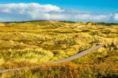 Dunes on the North Sea coast on the island Amrum, Germany.  royalty free stock images