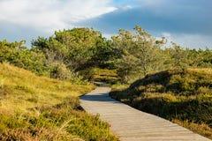 Dunes on the North Sea coast on the island Amrum Royalty Free Stock Images