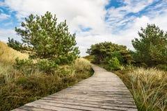 Dunes on the North Sea coast on the island Amrum Stock Image