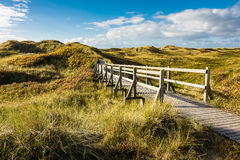 Dunes on the North Sea coast on the island Amrum Royalty Free Stock Photography