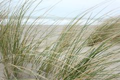 Dunes at the North Sea stock image