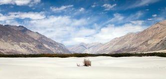 Dunes in Nubra Valley - Ladakh - Jammu and Kashmir Royalty Free Stock Photos