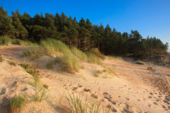 Dunes in Palanga Stock Photos