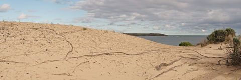 Dunes at Philip Island Stock Images